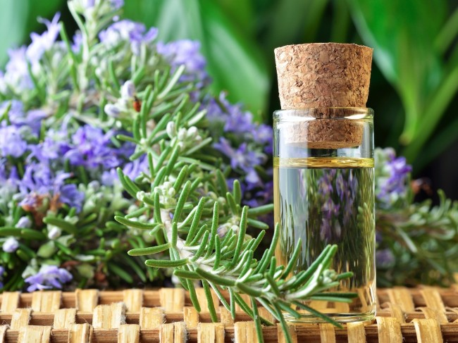 The aroma of rosemary protects the brain from aging and improves memory
