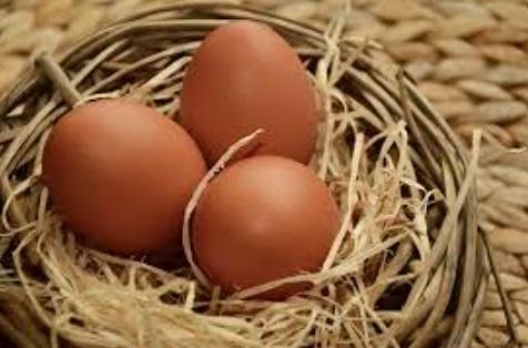 पहले अंडा आया या मुर्गी - जानें इस पहेली का जवाब