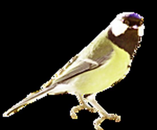 tubes_oiseaux_tiram_70