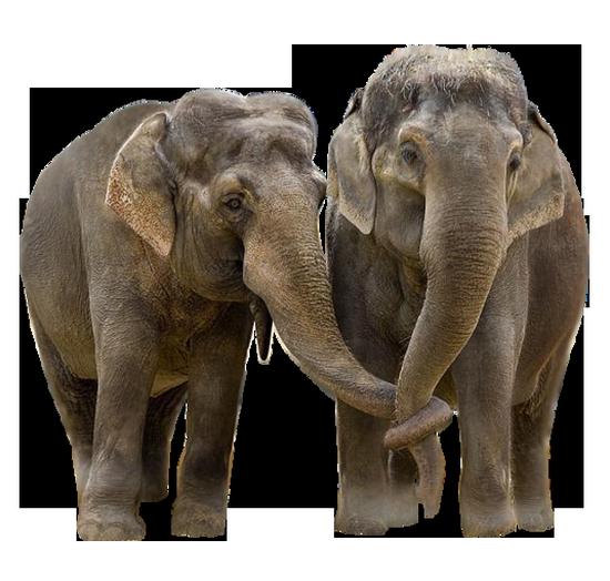 tubes_elephants_tiram_43