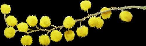 fleurs_paques_tiram_59
