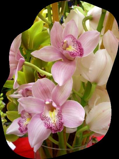 tubes_fleurs_tiram_635
