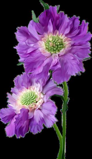 tubes_fleurs_tiram_86