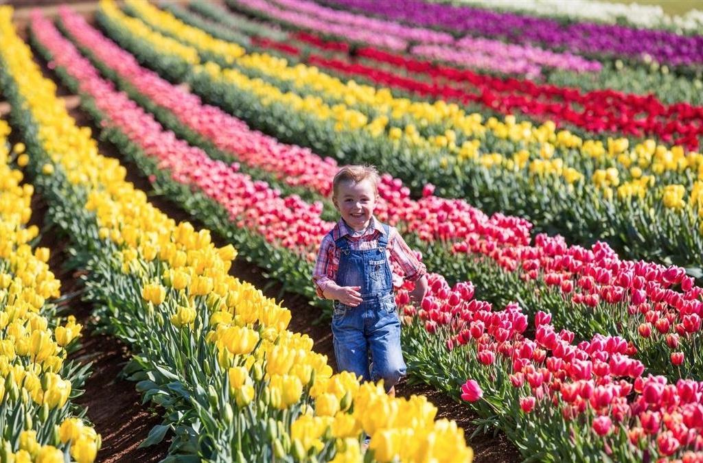 Tesselaar_Tulip_Festival
