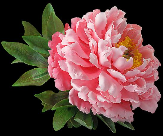 tubes_fleurs_tiram_241