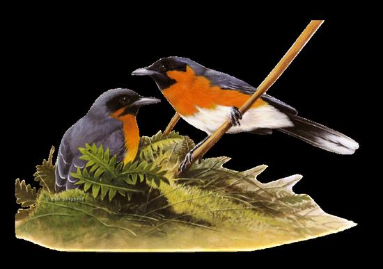 tubes_oiseaux_tiram_182