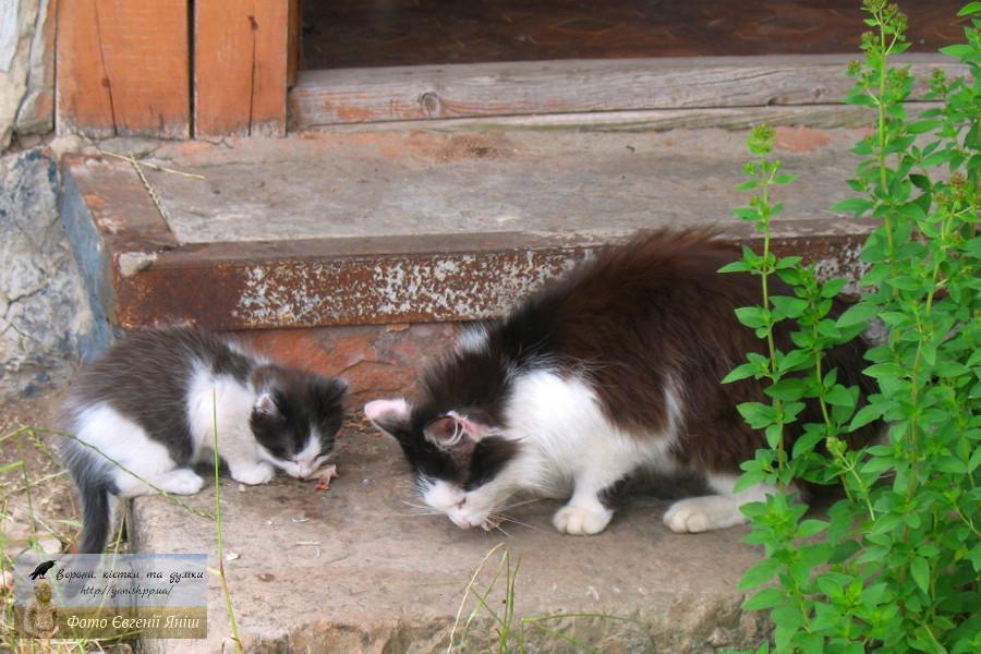 Кішка з кошеням — герої розповіді