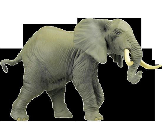 tubes_elephants_tiram_637