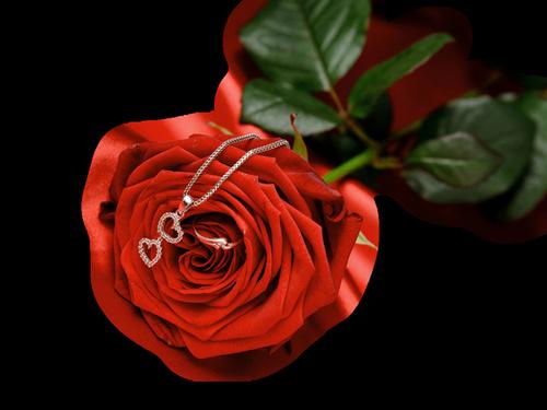tubes_fleurs_saint_valentin_tiram_268