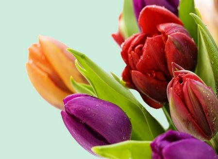 tubes_fleurs_tiram_882