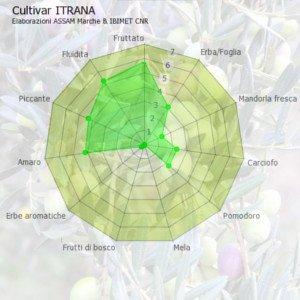 Characteristics of Extra Virgin Olive Oil Itrana, Itrana EVOO
