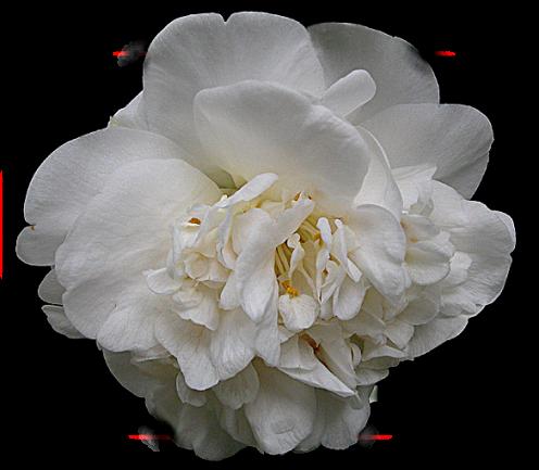 tubes_fleurs_tiram_843