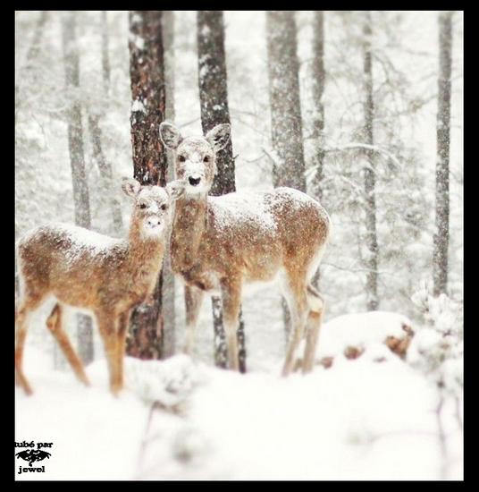animaux-noel-tiram-75