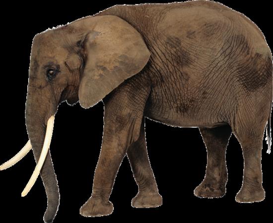 tubes_elephants_tiram_269