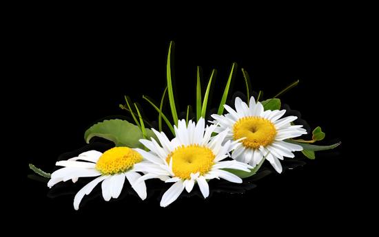 fleurs_paques_tiram_289