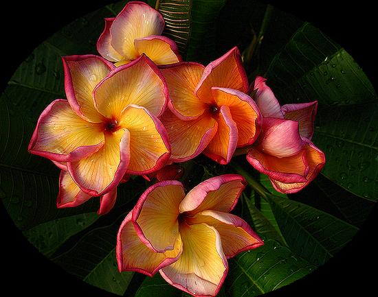 tubes_fleurs_tiram_186