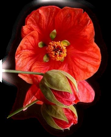 tubes_fleurs_tiram_723