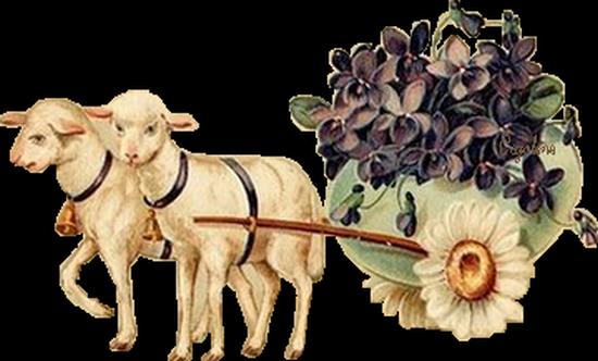 mouton_tiram_74