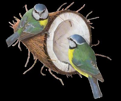 tubes_oiseaux_tiram_233