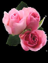tubes_fleurs_saint_valentin_tiram_140