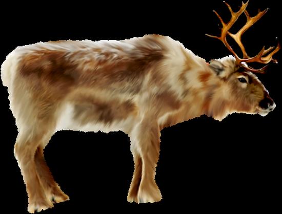 animaux-noel-tiram-52