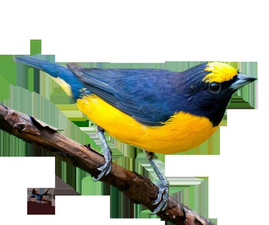 tubes_oiseaux_tiram_32