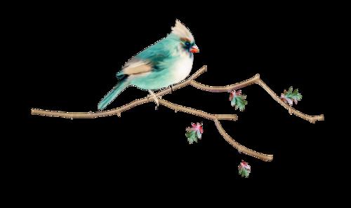 tubes_oiseaux_tiram_150