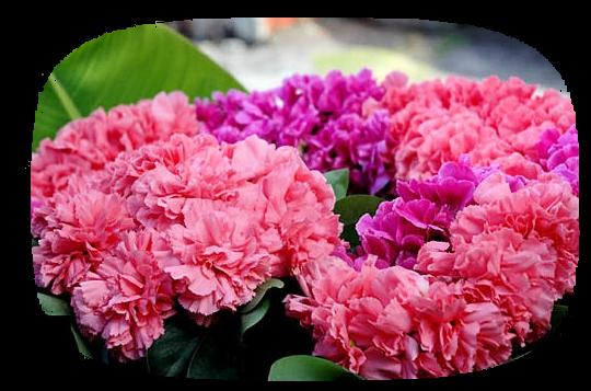 tubes_fleurs_tiram_653