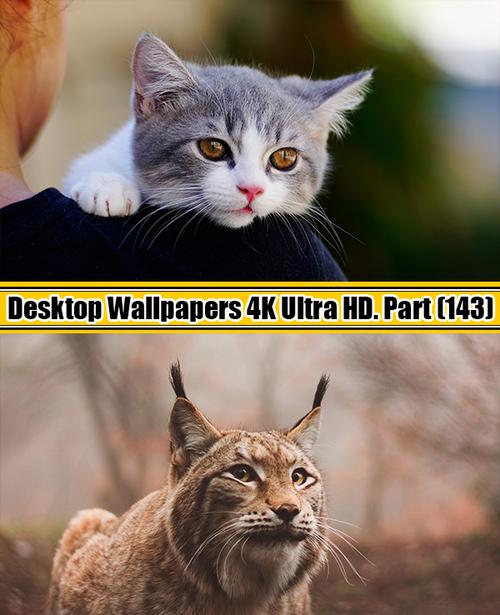 Deskop Wallpapers 4K Ultra HD. Part 143