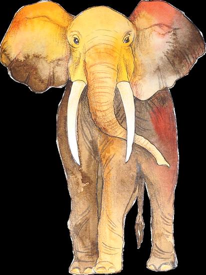 tubes_elephants_tiram_119