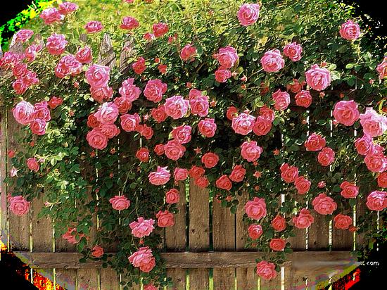 tubes_fleurs_tiram_151