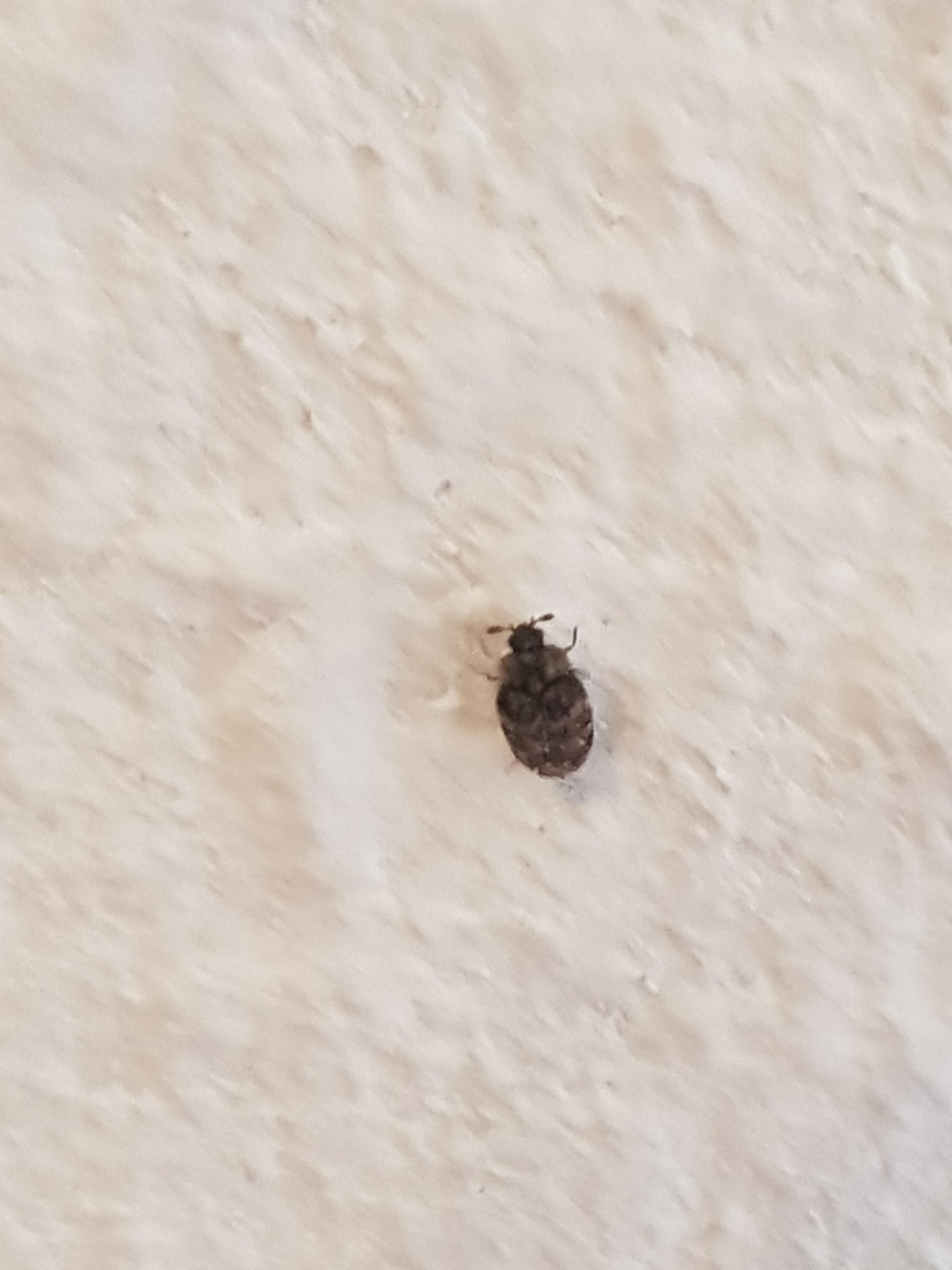 Käfer Küche kammerjaeger de thema anzeigen käfer in der wohnung