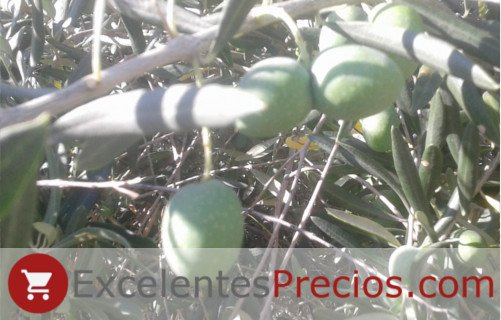 Peduncle Gordal olives