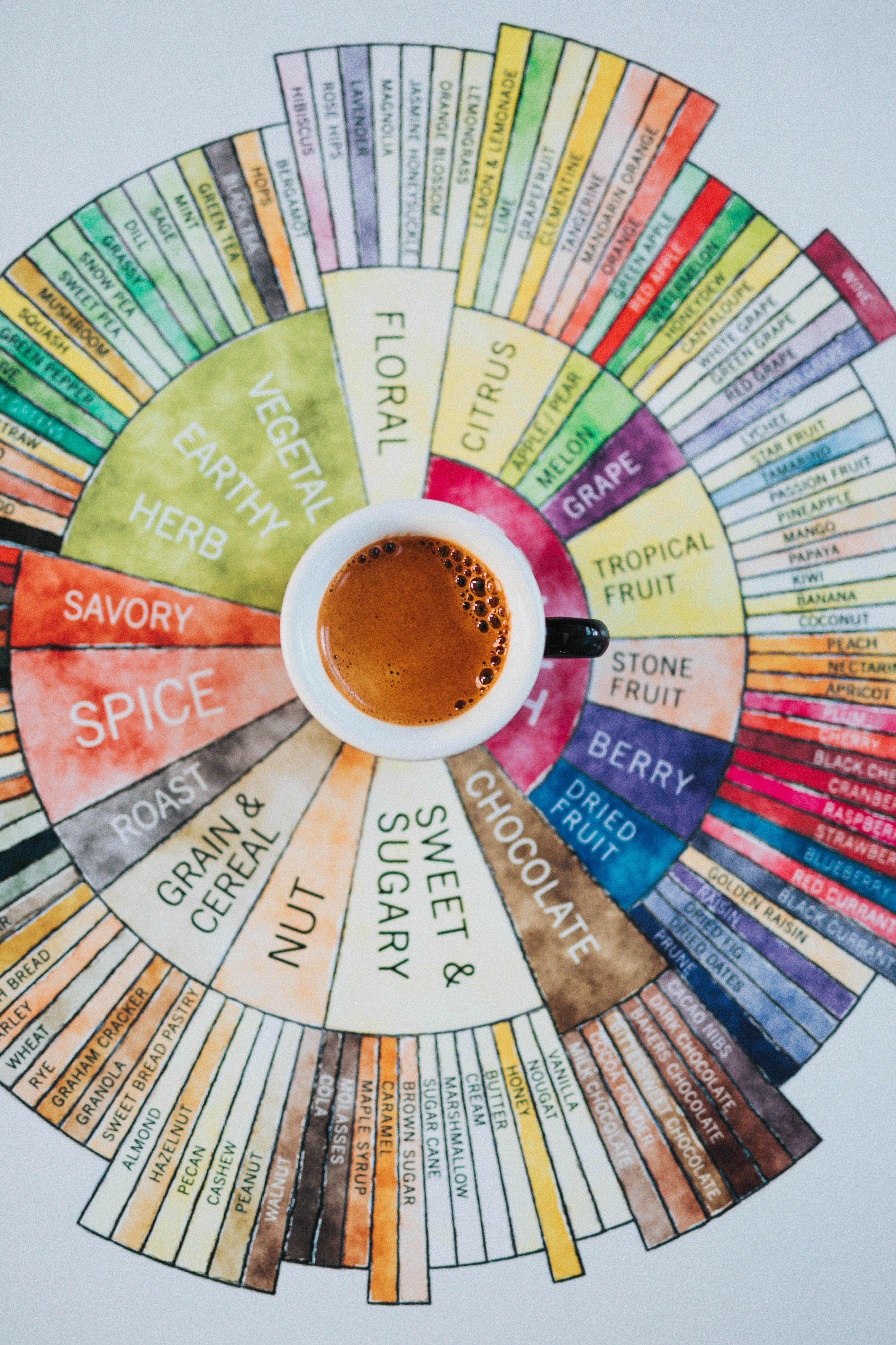 Kawa, smak, profile smakowe kawy