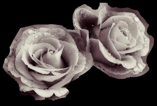 tubes_fleurs_tiram_388