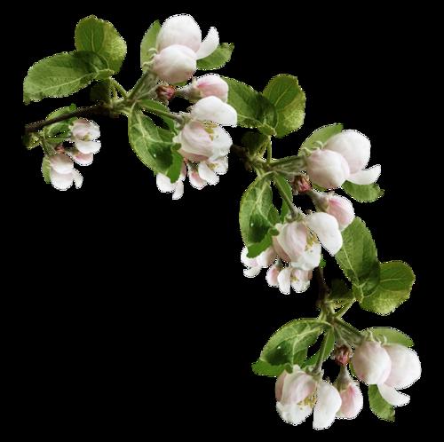 fleurs_paques_tiram_161