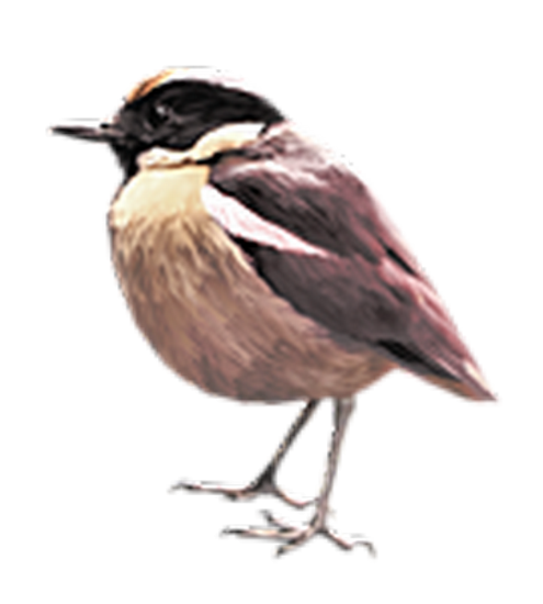 tubes_oiseaux_tiram_64