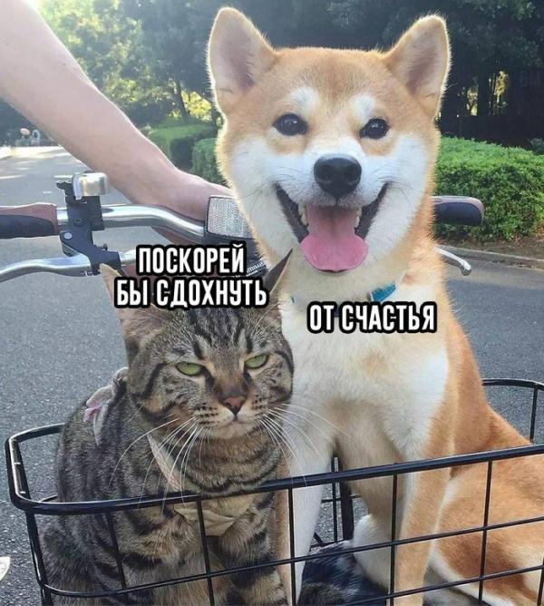 1539036431_drunkcow_net_foto_prikoly_10
