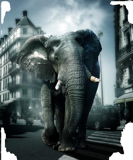 tubes_elephants_tiram_621