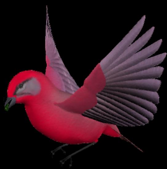 tubes_oiseaux_tiram_210