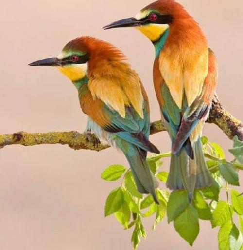 tubes_oiseaux_tiram_57
