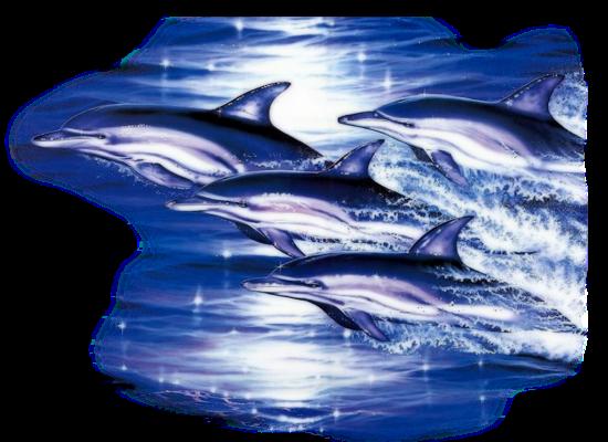 tubes_dauphins_tiram_30