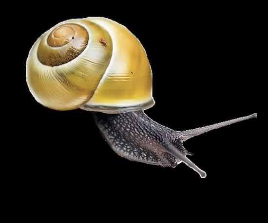 tubes_escargots_tiram_248