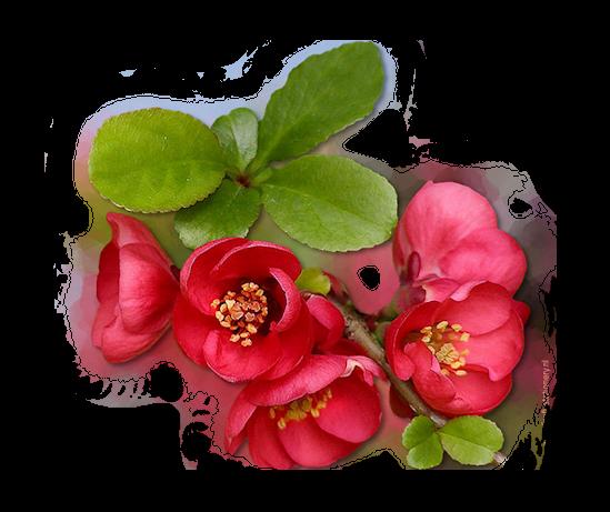 tubes_fleurs_tiram_829