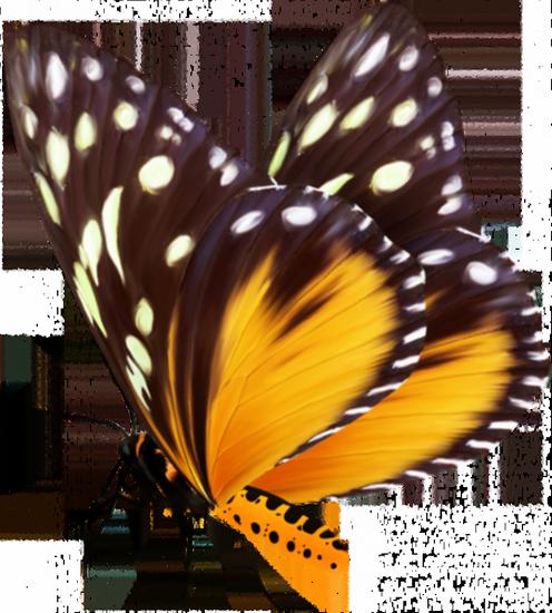 tubes_papillon_tiram_237