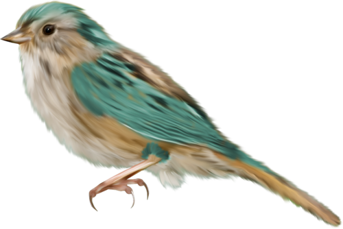 tubes_oiseaux_tiram_7