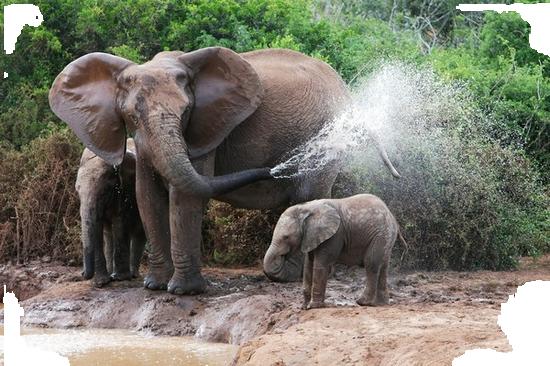 tubes_elephants_tiram_624
