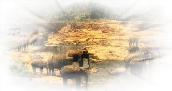 tubes_elephants_tiram_265