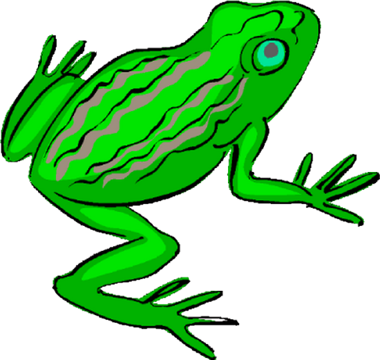 grenouille_tiram_57