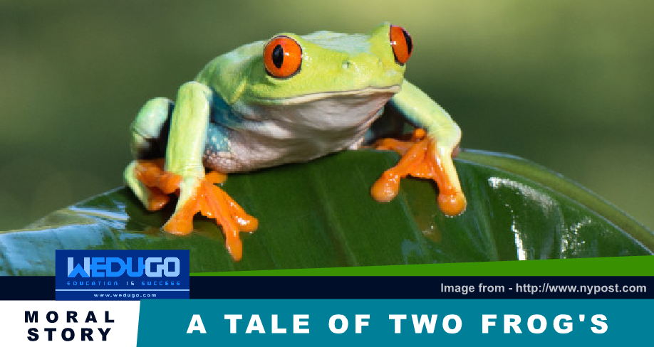 A tale of two frogs - Moral Story / Motivational Story